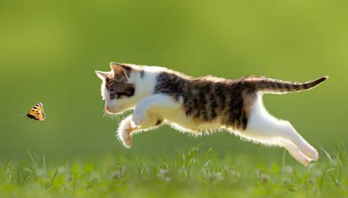 Domestic cat predation