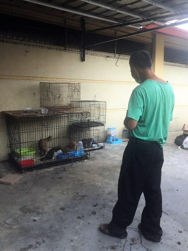 Homeless man looks after homeless cats in Sabah, E. Malaysia