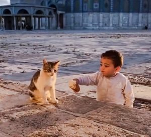 Infant offers bread to a community cat in India?