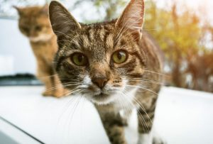 Photograph your cat when well and when ill for vet