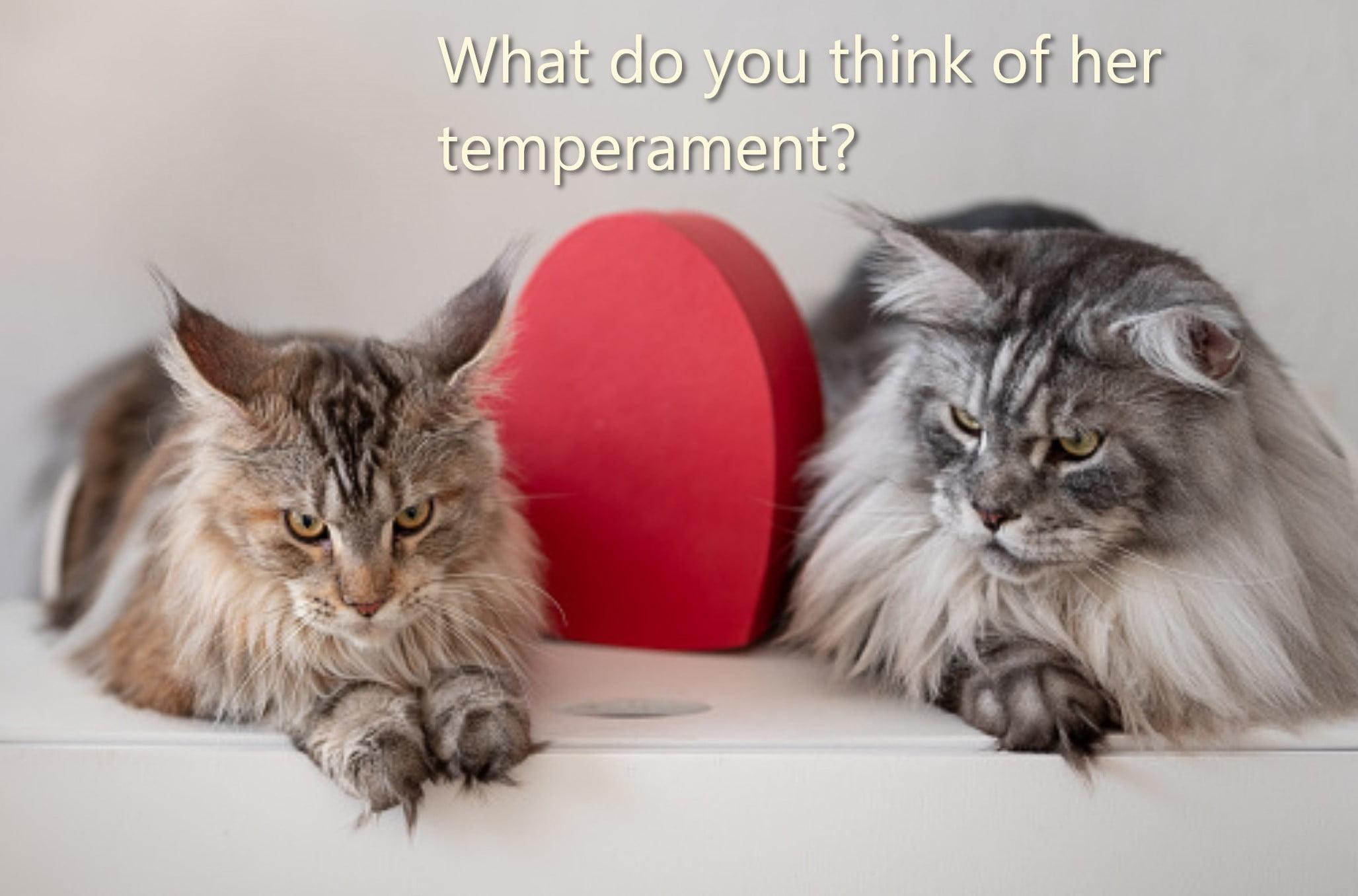 FTP test - cats discussing human temperament