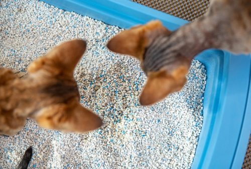 The most common cat behavior problem is depositing urine and/or poop outside of the litter box for one reason or another