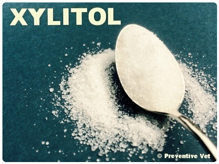 Xylitol a sugar-free sweetener is highly toxic to dogs but not cats