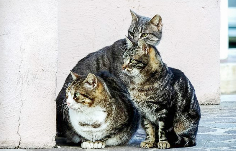 3 cats in a cat colony