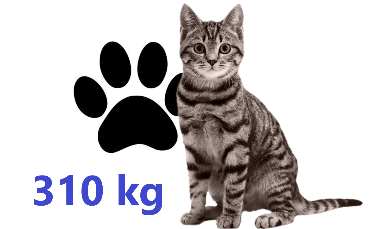 Carbon dioxide equivalent of a domestic cat