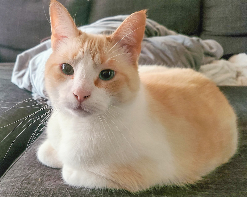 Cat 6 years at a shelter. Hermes was at last adopted and the shelter worked cried.