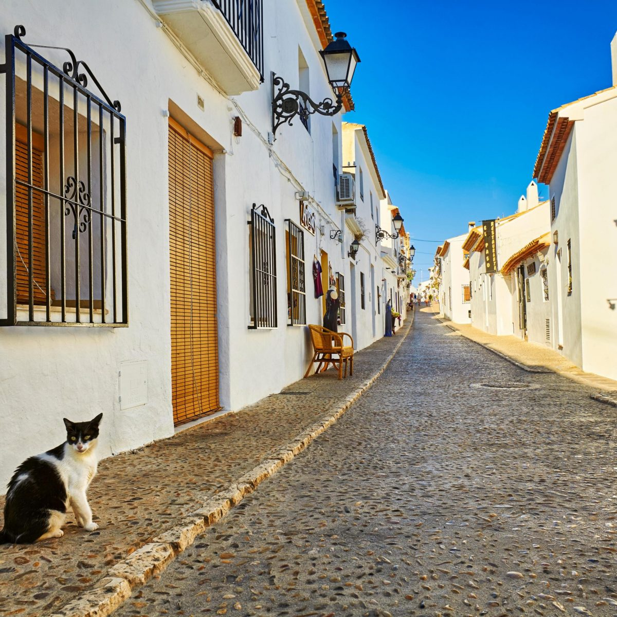 Cat in Spain. How was she treated?