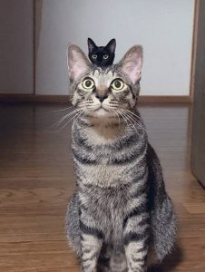 Cat pictures are about timing