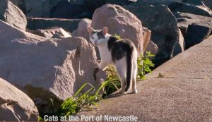 Cats at the port of Newcastle Australia