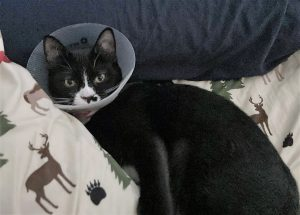 Jarvis with his Elizabethan collar after his leg amputation