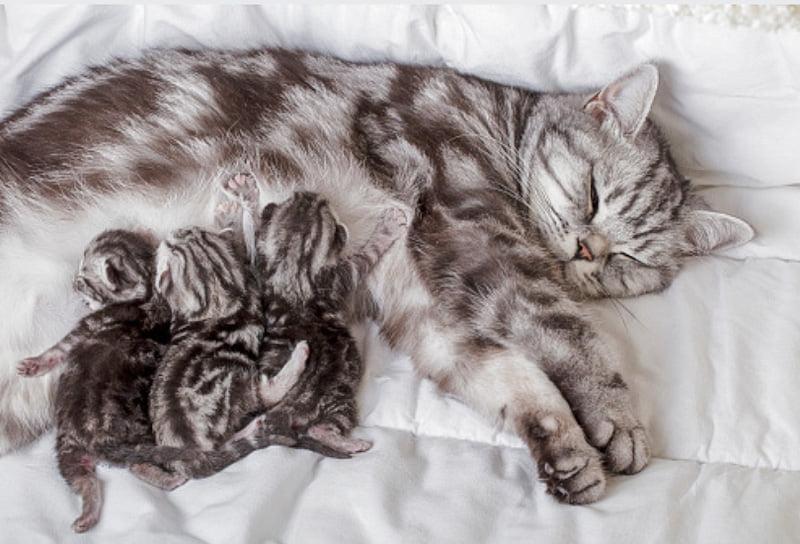 Mother nurses her kittens