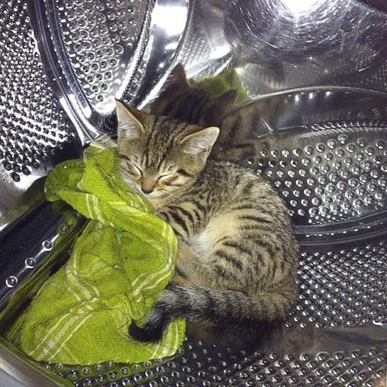 """My cat used to sleep in the washing machine"""