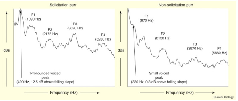 Solicitation purr versus standard version