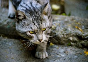 Stray cat of Yerevan Armenia
