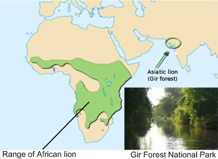 Gir forest map and Africa lion range