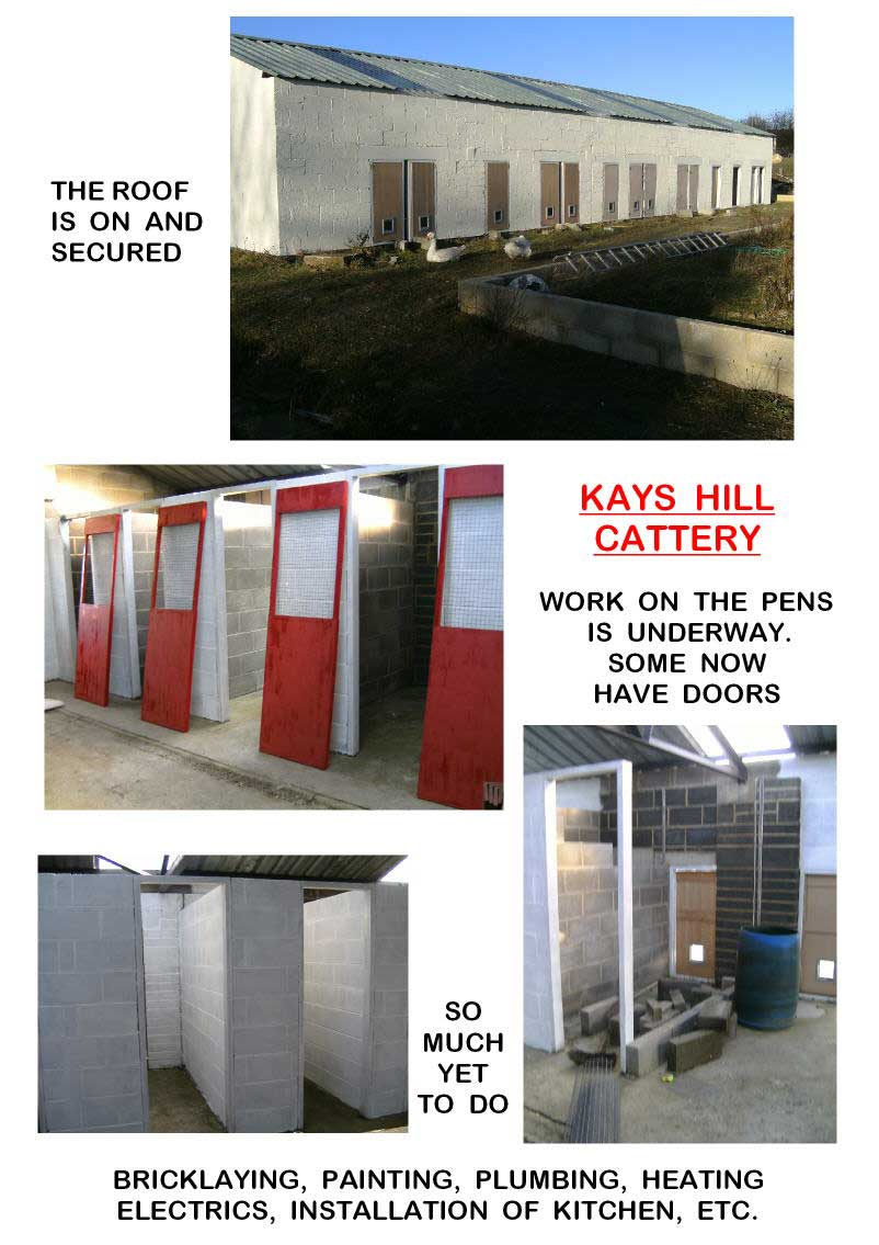 Kays Hill Cattery