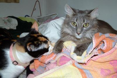 Furby and Lola say practice safe laundry