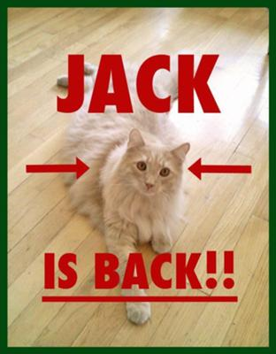 Jack the Cat found!