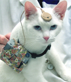 Cat used for animal testing