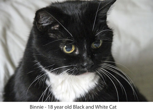 Black and white cat who is 18 or more years old