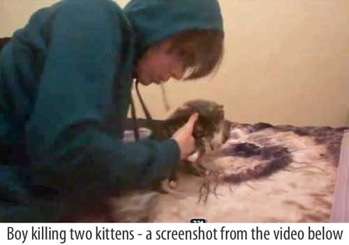 Warning Video Of Boy Killing Two Kittens Poc