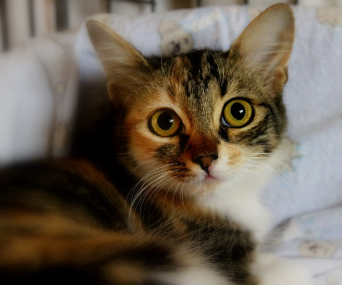 Facts About Cats And Kittens
