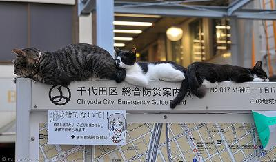 Abandoned or Stray Cats - Japan - sign says,