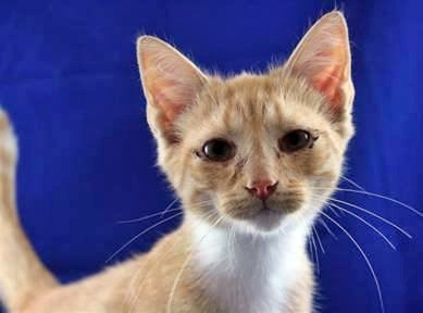 Cat ready for adoption