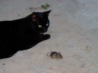 cat and mouse1