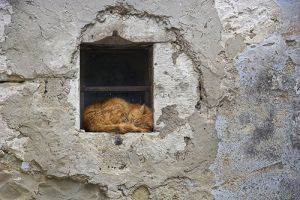cat croatia