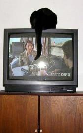 cat image of cat on top of TV