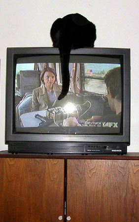 cat on top of TV