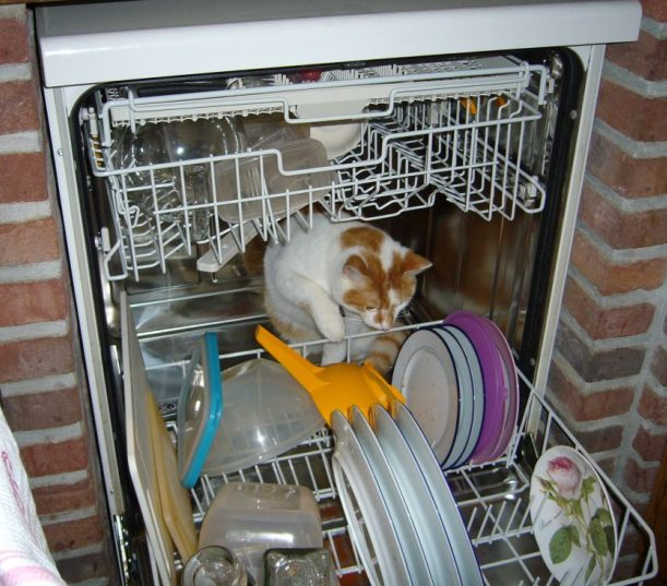 cat in dishwasher