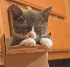 sleepy cat in a box