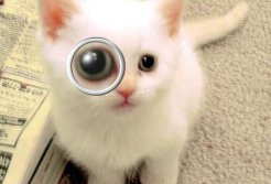 cat and magnified eye