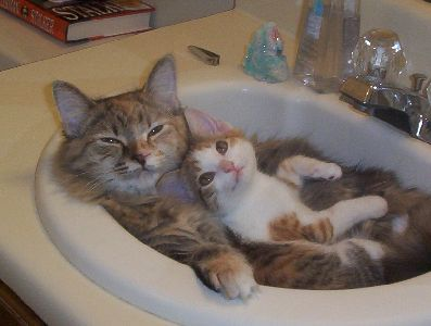 cat image of two cats in a basin