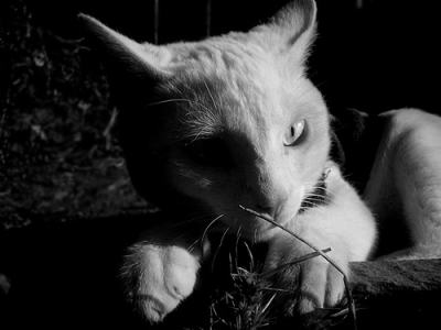 cat in black and white image