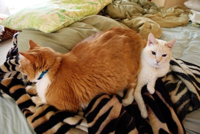 Michael (Admin) added this nice pic of two cats on a bed. one (the big one) on top of the other! Photo by ex.libris