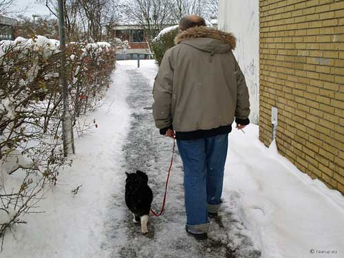 Finn Frode walking his cat - Success!