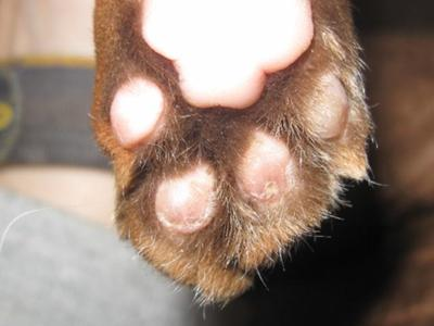 Cat's pads damaged in use after declawing.