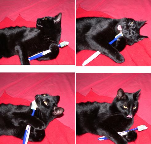 dental gel<br /><br />  for cats