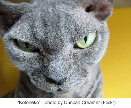 fictional cat names