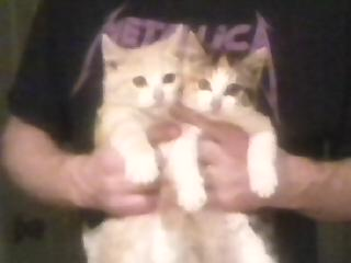 The calico is Rosie and the peach one is Lester Flatt Jr.
