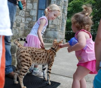 "Children with an F1 Savannah cat ""Titan"""