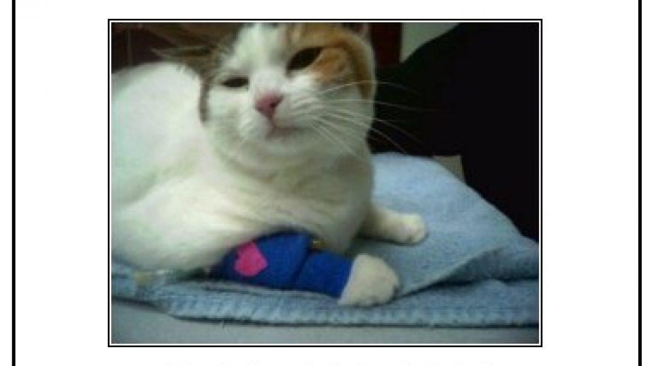 Home Remedy for Vestibular Disease in Cats | PoC