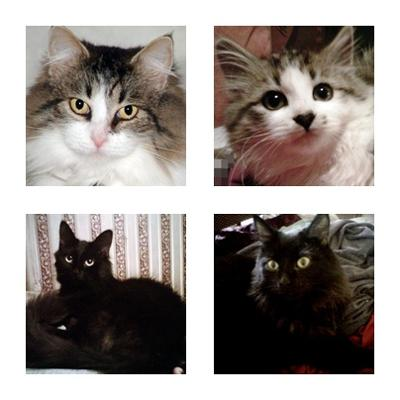 Mia, Baby Fluffy, Midnight and Cassie