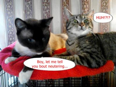 Sshhh...neutering scary word...