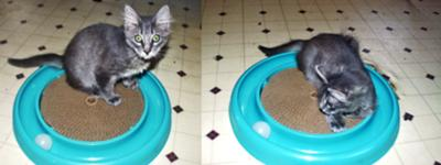 Furby and Bergan Turbo Scratcher