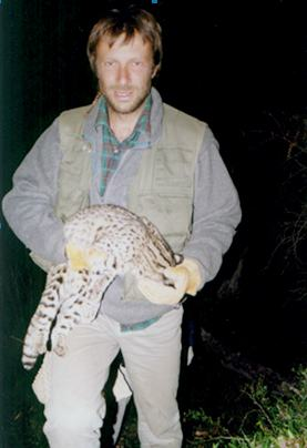 Geoffroy's Cat being handled by researcher