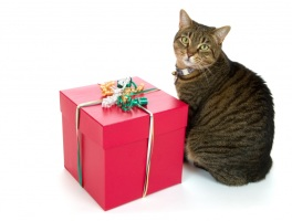 gift box and cat